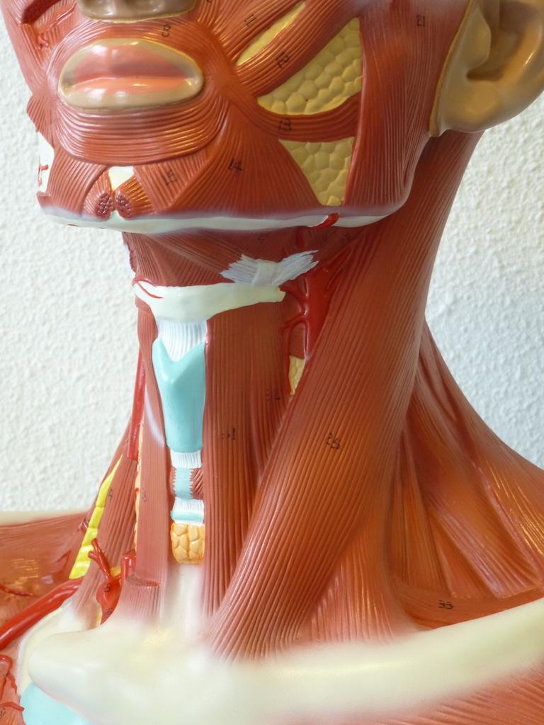 Halsspieren